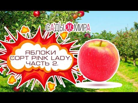 Яблоко PiNK LADY часть 2