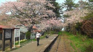 桜吹雪の津軽鉄道 前面展望(津軽五所川原-津軽中里) 2015-4-27