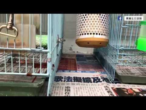 黑豬日常#07 - 保溫日常小分享 - YouTube