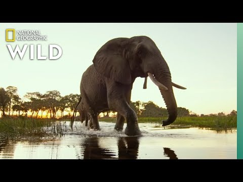 Okavango Delta Wildlife | Into the Okavango