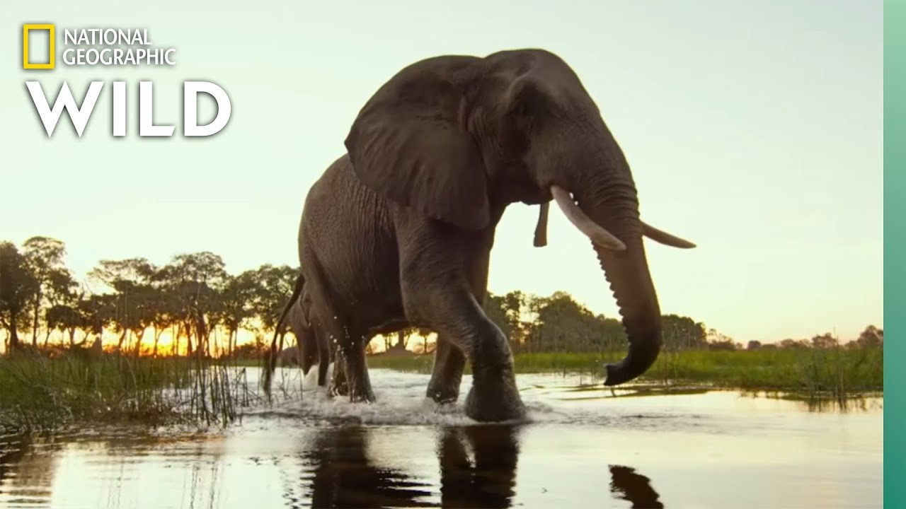 Okavango Delta Wildlife | Into the Okavango