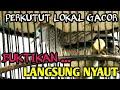 Perkutut Lokal Gacor Pikat Gendewo Sabdo Suara Burung Perkutut  Mp3 - Mp4 Download