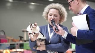 Презентация породы сфинкс на выставке Royal Canin 2016