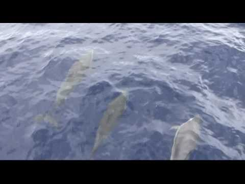 St. Lucia - Whale & Dolphin Watching