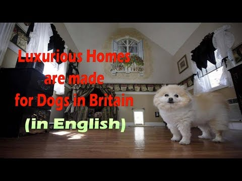 LUXURIOUS HOUSE FOR DOG (in English) || DOG HOUSE || PET HOUSE || DOG HOMES