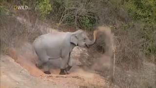 Nat Geo Wild Nature Documentary Wildlife Animal Discovery Channel Animals