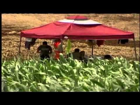 Federal Government Order Back Wages To Thai Farm Workers