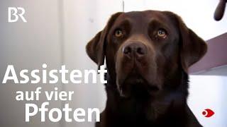 Hilfe auf vier Pfoten: Assistenz- und Therapiehunde   Sehen statt Hören   BR