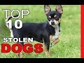 Top 10 Most Commonly Stolen Dog Breeds