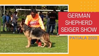 GERMAN SHEPHERD SEIGER SHOW 2020 PATIALA || 9815081234 ||G.R DOG HOME