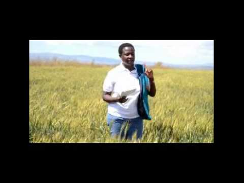 Theresa -a Large scale wheat farmer from Tanzania