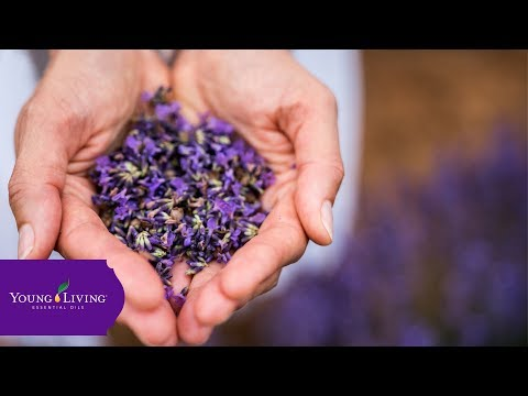 international-essential-oils-day-2019-|-young-living-essential-oils