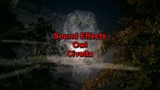 Sound Effects Owl