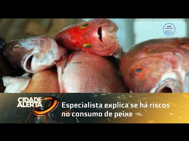 Especialista explica se há riscos no consumo de peixe