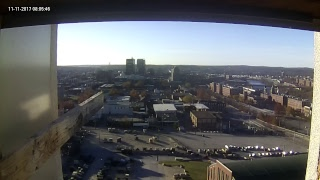 Single Digits Live Peregrine Falcon Feed1