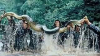 Video GIANT ANACONDA   WORLD'S BIGGEST SNAKE FOUND IN AMAZON RIVER   Biggest Python Snake in Amazon forest download MP3, 3GP, MP4, WEBM, AVI, FLV Mei 2018