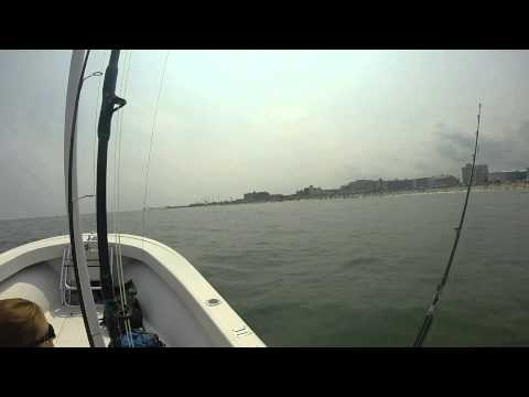 Some cool stuff weve seen fishing offshore of Ocean CIty MD 2014