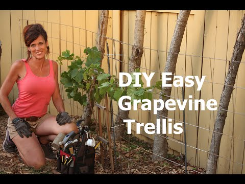 How to Build a DIY Easy Grapevine Trellis