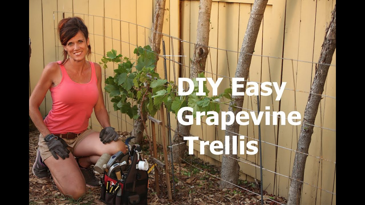 How To Build A Diy Easy Grapevine Trellis Youtube