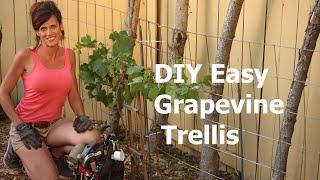 How to Build a DIY Easy Grapevine Trellis