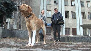 Захисники тварин в Житомирі врятували собаку від голоної смерті  - Житомир.info