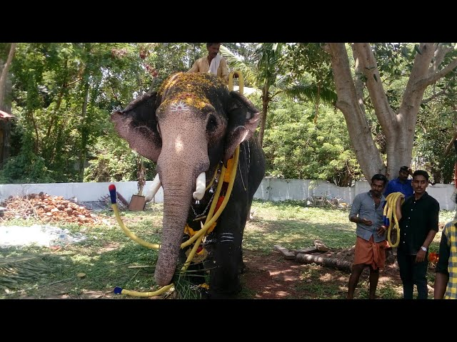MULLATH GANAPATHY and VEMBANAD ARJUNAN - The Mass Tuskers @ Parimanam Temple Festival