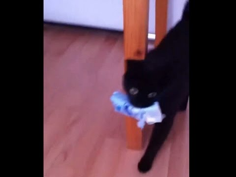 My cat is a dog - funny pet video-clip