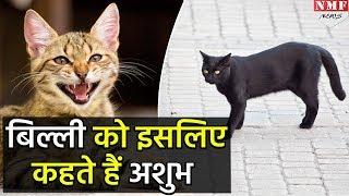 तो इसलिए बिल्ली को माना जाता है अशुभ जानवर
