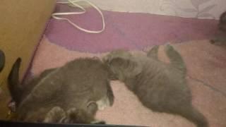 Ксюша с котятами кусаются малыши кошка и котята