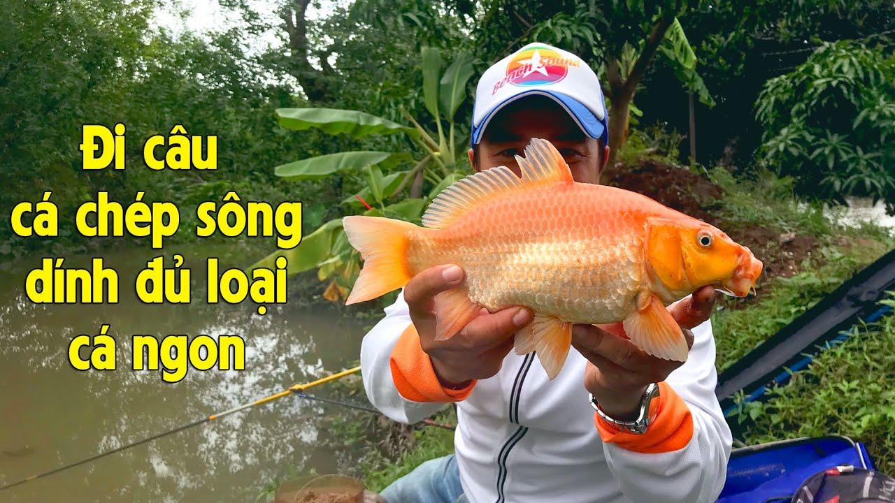 FISHING . CÂU CÁ CHÉP SÔNG DÍNH ĐỦ THỨ LOẠI CÁ NGON . CÂU ĐÀI