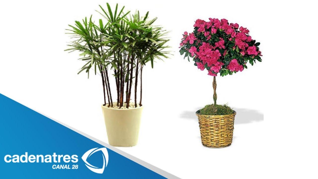 cu les son las plantas que son utilizadas por el feng