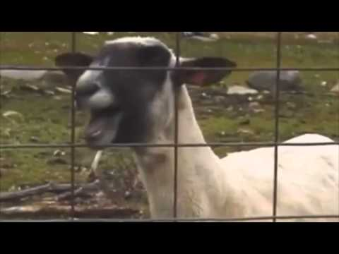 Taylor Swift - I knew you were trouble Ft. Screaming goat