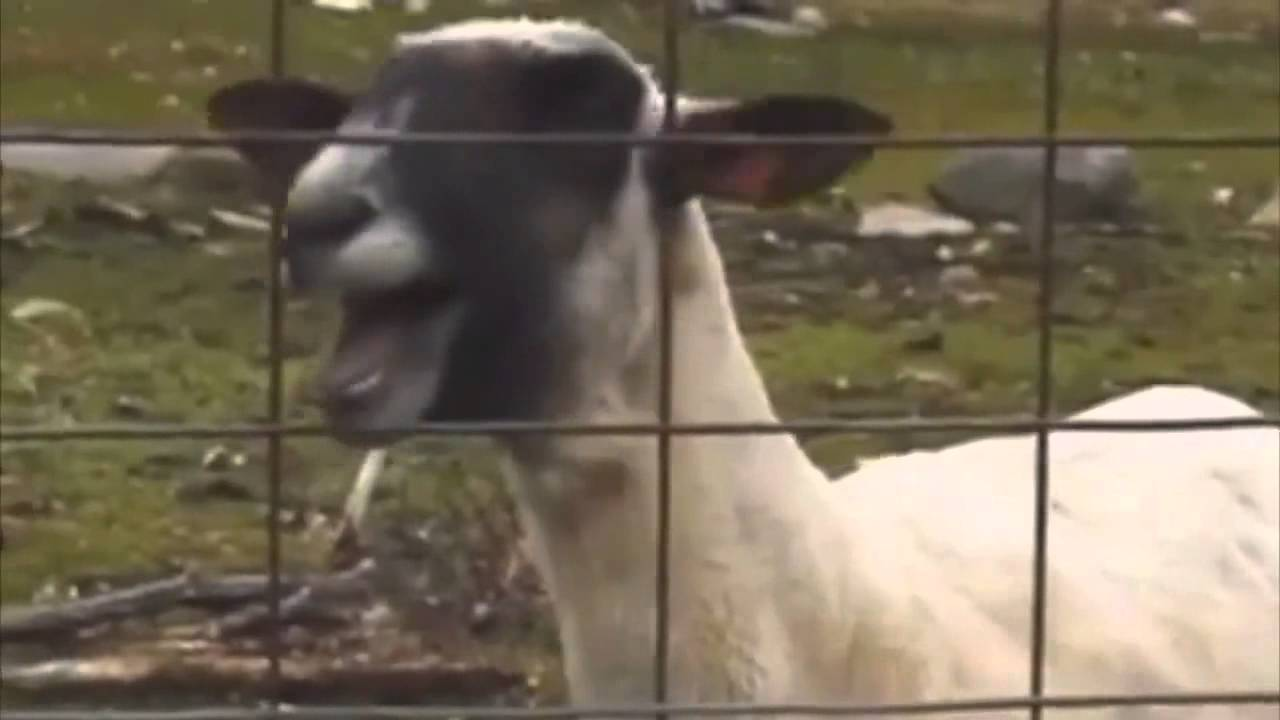 taylor swift i knew you were trouble ft screaming goat youtube