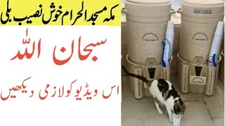 Beautiful Video Caught On Camera in Masjid Ul Haram Makkah Saudi Arabia/Cat Drinking Zamzam Water/