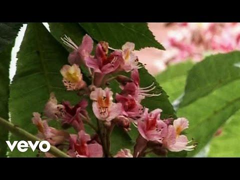 Sugarplum Fairy - She