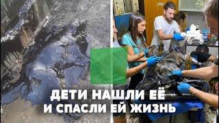 Дети в яме нашли собаку, полностью покрытую чёрной субстанцией