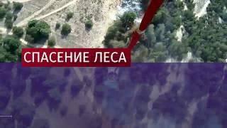 Площадь лесного пожара под Ростовом увеличивается