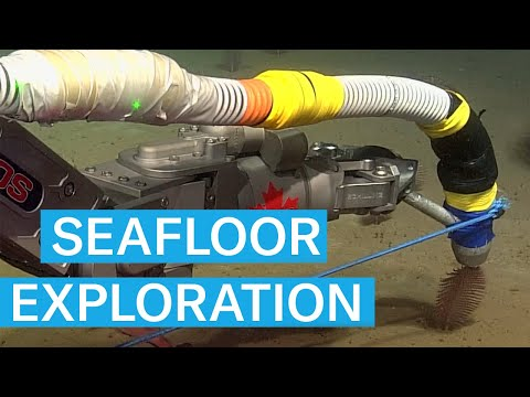 Exploring the SEAFLOOR of the GULF OF ST LAWRENCE from YouTube · Duration:  5 minutes 11 seconds