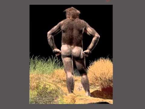 Australopithecus africanus Mrs  Ples Turntable