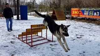 Безопорные прыжки через барьеры