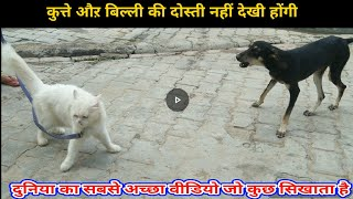 Try not to laugh challenge - funny cat and dog - cute cat and dog - anger cat
