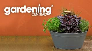 How to plant a Herb and Vegetable Garden - planting and growing herbs & vegies easy