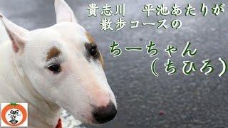 犬の撮影 nideru http://dogcosplayphoto.blogspot.jp/ 音楽は甘茶の音...