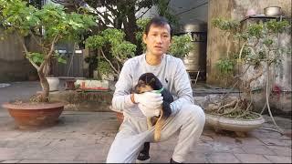 HUẤN LUYỆN CHÓ SỦA VÀ SỦA CẢNH BÁO | HĻV Thiếu tá Hà Xuân Hoàng