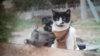 Кошки против зомби 😼😼😼