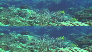 Багамы 3D (HD)
