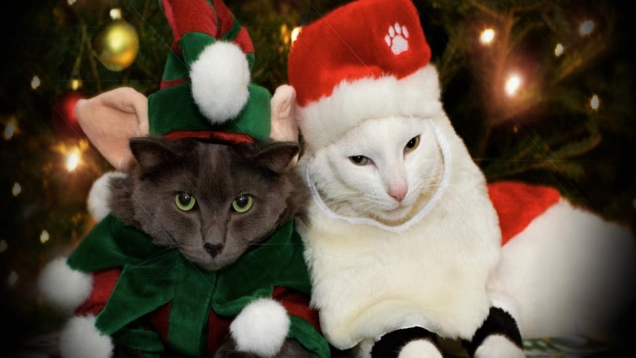 funny pets in christmas costumes funny pets youtube