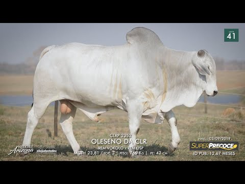 LOTE 41 - CLRP 2352