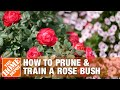 How To Prune and Train a Rose Bush | The Home Depot Gardenieres