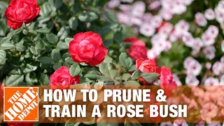 How To Prune and Train a Rose Bush - The Home Depot Gardenieres